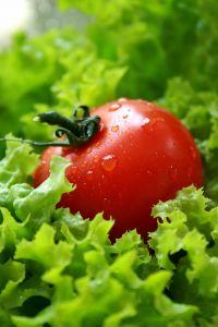 Tomato Lettuce